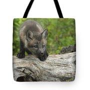 Red Fox Kit Tote Bag by Sandra Bronstein