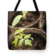 Seedlings  Tote Bag by Elena Elisseeva