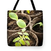 Seedlings growing in peat moss pots Tote Bag by Elena Elisseeva