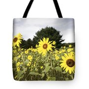 Sunflower Patch Tote Bag by Ray Summers Photography
