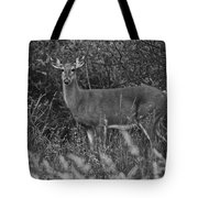 Well Hello There Tote Bag by Frozen in Time Fine Art Photography