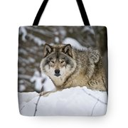 Timber Wolf Pictures Tote Bag by Wolves Only