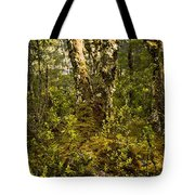 Ancient Woods Tote Bag by Tim Hester