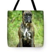 Boxer Dog Tote Bag by Jean-Michel Labat