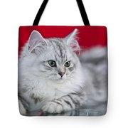 British Longhair Kitten Tote Bag by Melanie Viola