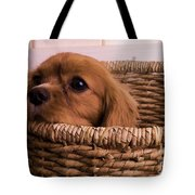Cavalier King Charles Spaniel Puppy In Basket Tote Bag by Edward Fielding