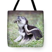 Cute Puppies Tote Bag by Jannis Werner