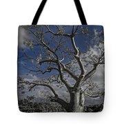 Ghost Tree Tote Bag by Debra and Dave Vanderlaan