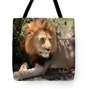 Male Lion On The Masai Mara  Tote Bag by Aidan Moran