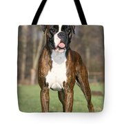 Boxer Dog Tote Bag by Johan De Meester