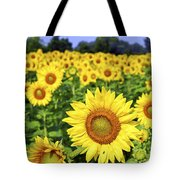 Sunflower field Tote Bag by Elena Elisseeva
