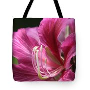Bauhinia blakeana - Hong Kong Orchid - Hawaiian Orchid Tree  Tote Bag by Sharon Mau