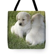 Yellow Labrador Puppy Tote Bag by Linda Freshwaters Arndt