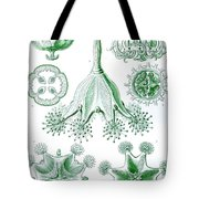 A Collection Of Stauromedusae Tote Bag by Ernst Haeckel