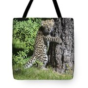 A Whole New World Tote Bag by Sandra Bronstein