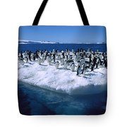 Adelie Penguins On Icefloe Antarctica Tote Bag by Colin Monteath