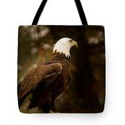 American Bald Eagle Awaiting Prey Tote Bag by Douglas Barnett
