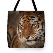 Amur Tiger 4 Tote Bag by Ernie Echols
