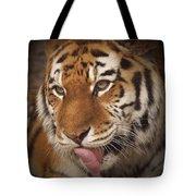 Amur Tiger 5 Tote Bag by Ernie Echols