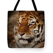 Amur Tiger Tote Bag by Ernie Echols
