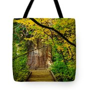 An Old Growth Douglass Fur In The Grove Of The Patriarches Mt Rainer National Park Tote Bag by Jeff Swan