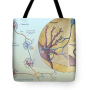 Anatomy Of Neurons Tote Bag by Carlyn Iverson