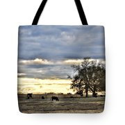 Angus Evening Tote Bag by Jan Amiss Photography
