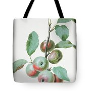 Apples Tote Bag by Pierre Joseph Redoute