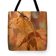 Autumn Acer Tote Bag by Anne Gilbert