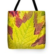 Autumn Maple Leaves Tote Bag by Adam Romanowicz