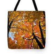 Autumn Maple Trees Tote Bag by Elena Elisseeva