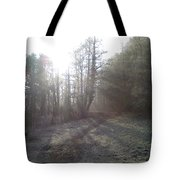 Autumn Morning 3 Tote Bag by David Stribbling
