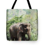 Baby Elephant Chiang Mai, Thailand Tote Bag by Stuart Corlett