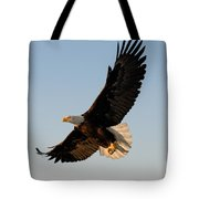 Bald Eagle Flying With Fish In Its Talons Tote Bag by Stephen J Krasemann