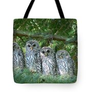 Barred Owlets Nursery Tote Bag by Jennie Marie Schell