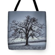 Barren Winter Scene With Tree Tote Bag by Dan Friend