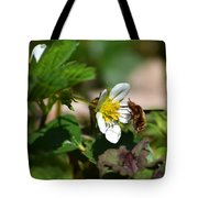 Bee Fly On White Flowers Tote Bag by Christina Rollo