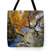 Big Orange Maple Tree Tote Bag by Christina Rollo