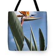 Bird Of Paradise Tote Bag by Brenda Burns