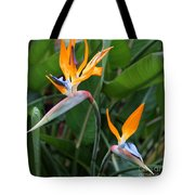 Bird Of Paradise Tote Bag by Carol Groenen