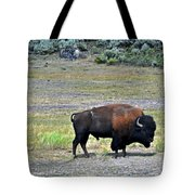 Bison In Lamar Valley Tote Bag by Marty Koch