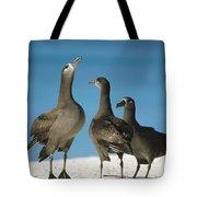 Black-footed Albatross Gamming Group Tote Bag by Tui De Roy