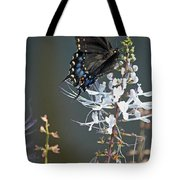 Black Swallowtail Among The Cats Whiskers Tote Bag by Suzanne Gaff
