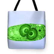 Blue Green Algae, Tem Tote Bag by Jerome Pickett-Heaps
