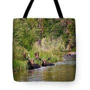 Bull Moose Summertime Spa Tote Bag by Timothy Flanigan