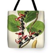 Butea Superba Tote Bag by William Roxburgh
