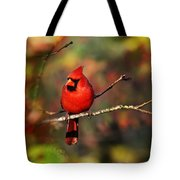 Cardinal Territory Tote Bag by Christina Rollo