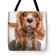 Cavalier King Charles Spaniel Puppy Tote Bag by Edward Fielding