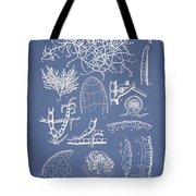 Champia Parvula Tote Bag by Aged Pixel