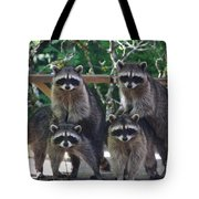 Cheerleading Raccoons Tote Bag by Kym Backland